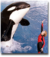 Whale Done!: The Power of Positive Relationships (DVD)